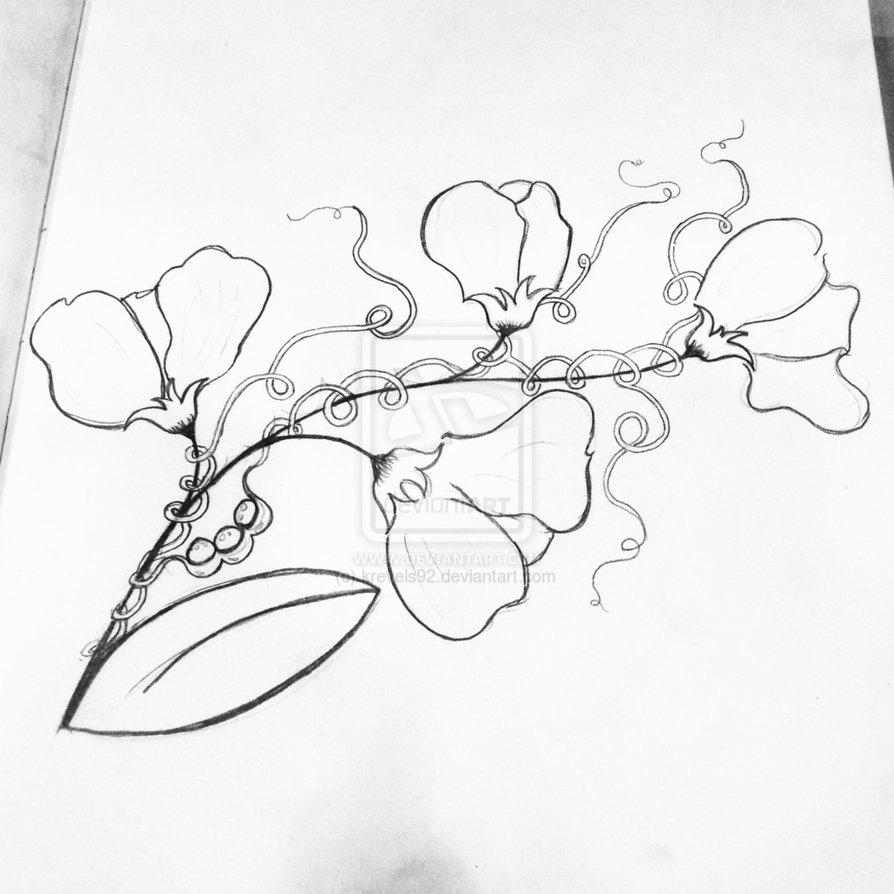 894x894 Sweet Pea Flower Drawing