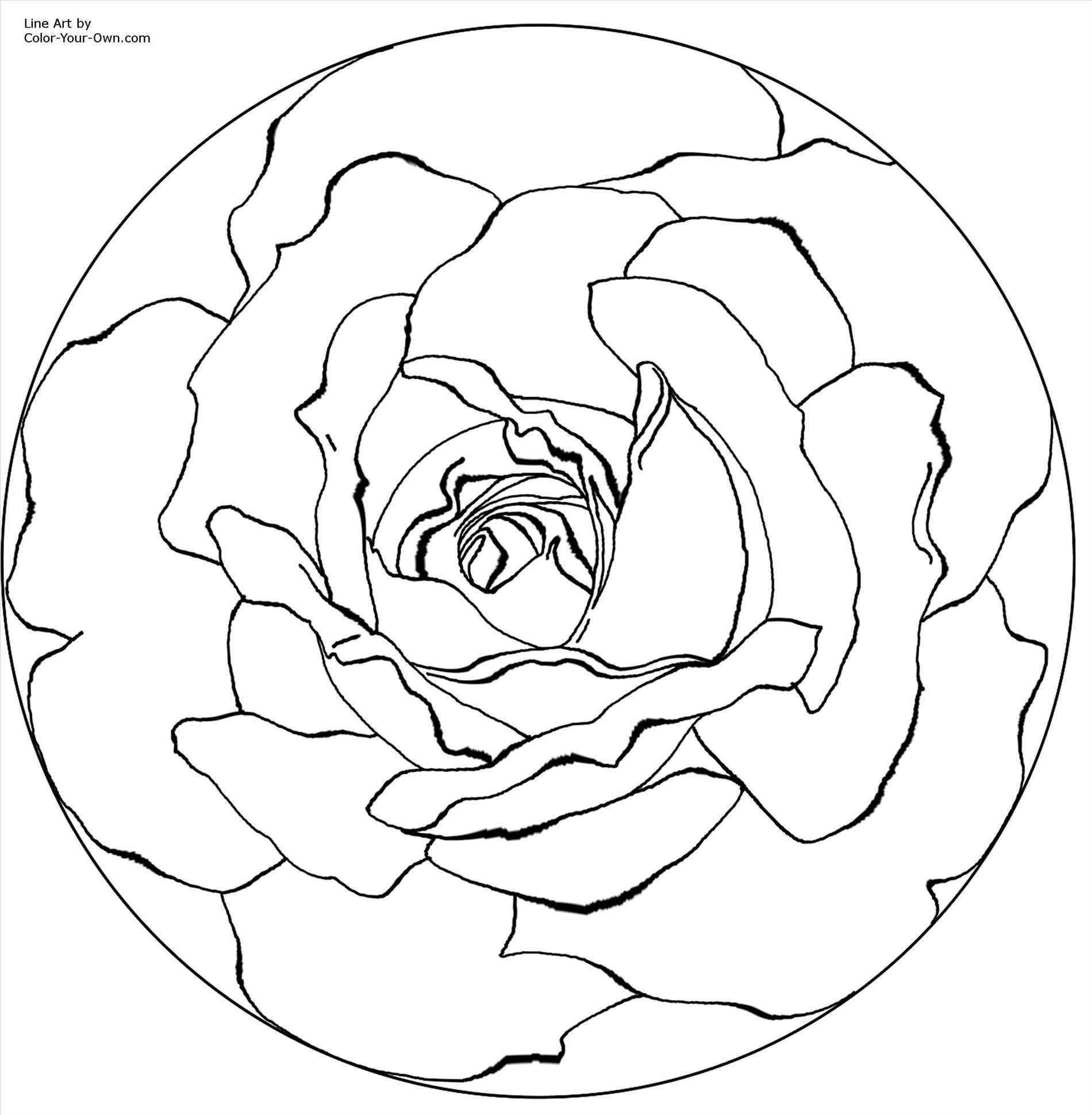 1900x1940 Flowers Dahlia Bloom Drawings Line Rose Drawing Outline