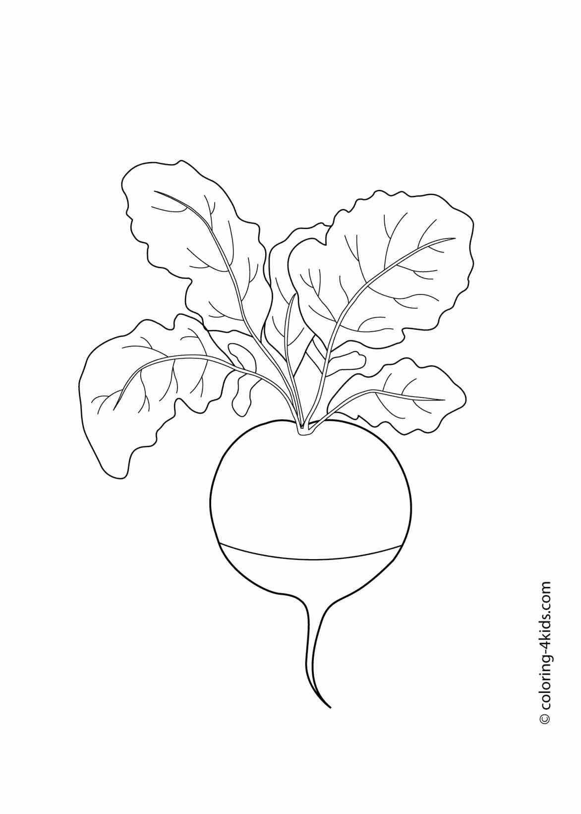Sweet Potato Drawing At Getdrawings Com Free For Personal Use
