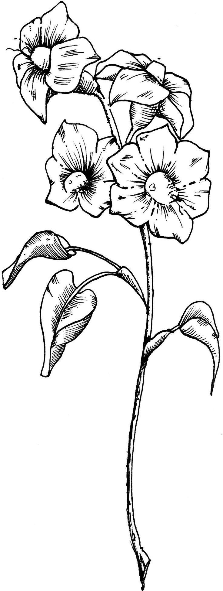 736x1946 98 Best Drawings Images On Botanical Art, Botanical