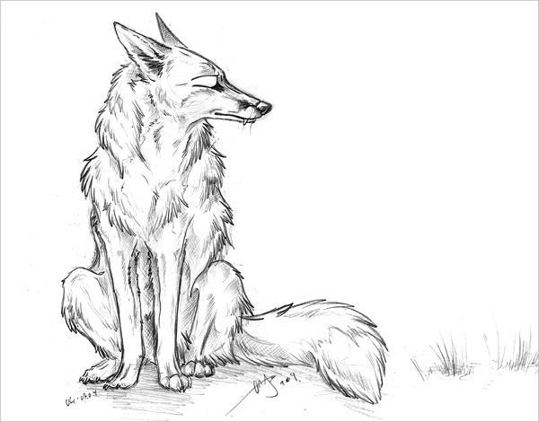 Swift Fox Drawing