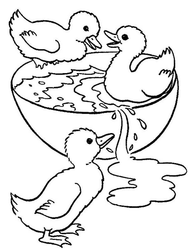 600x798 Duckling Swimming In Bowl Coloring Page