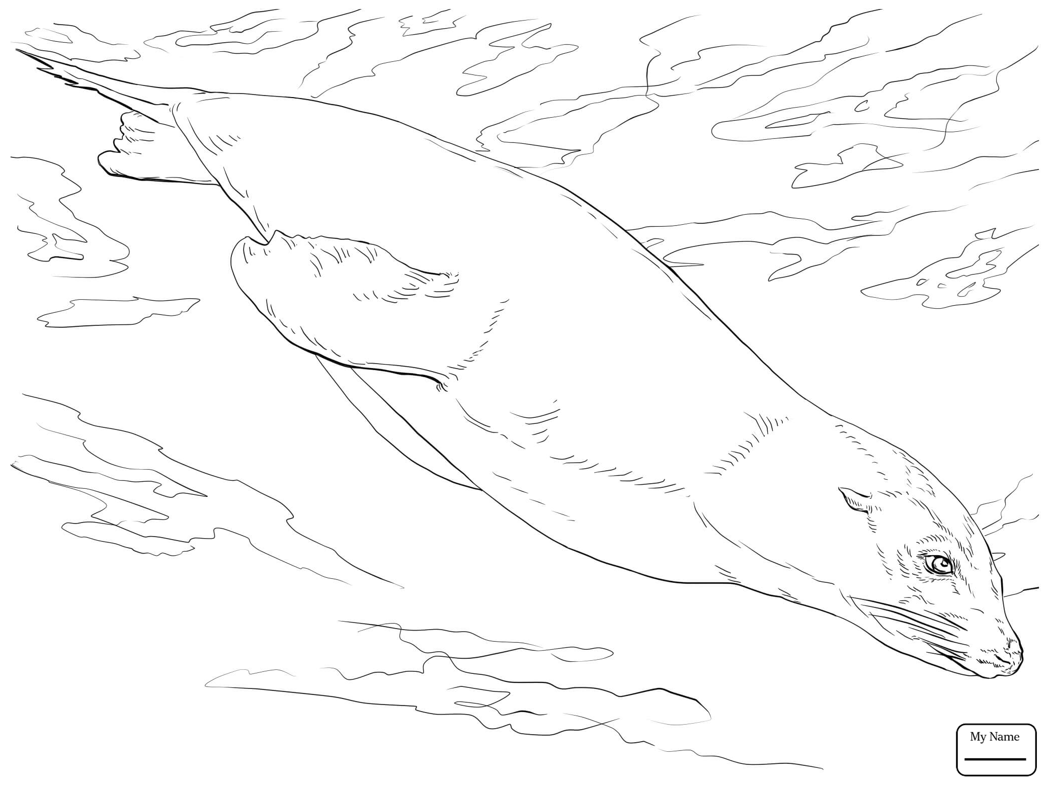 2089x1567 Coloring Pages Mammals Sea Lions California Sea Lion Swimming