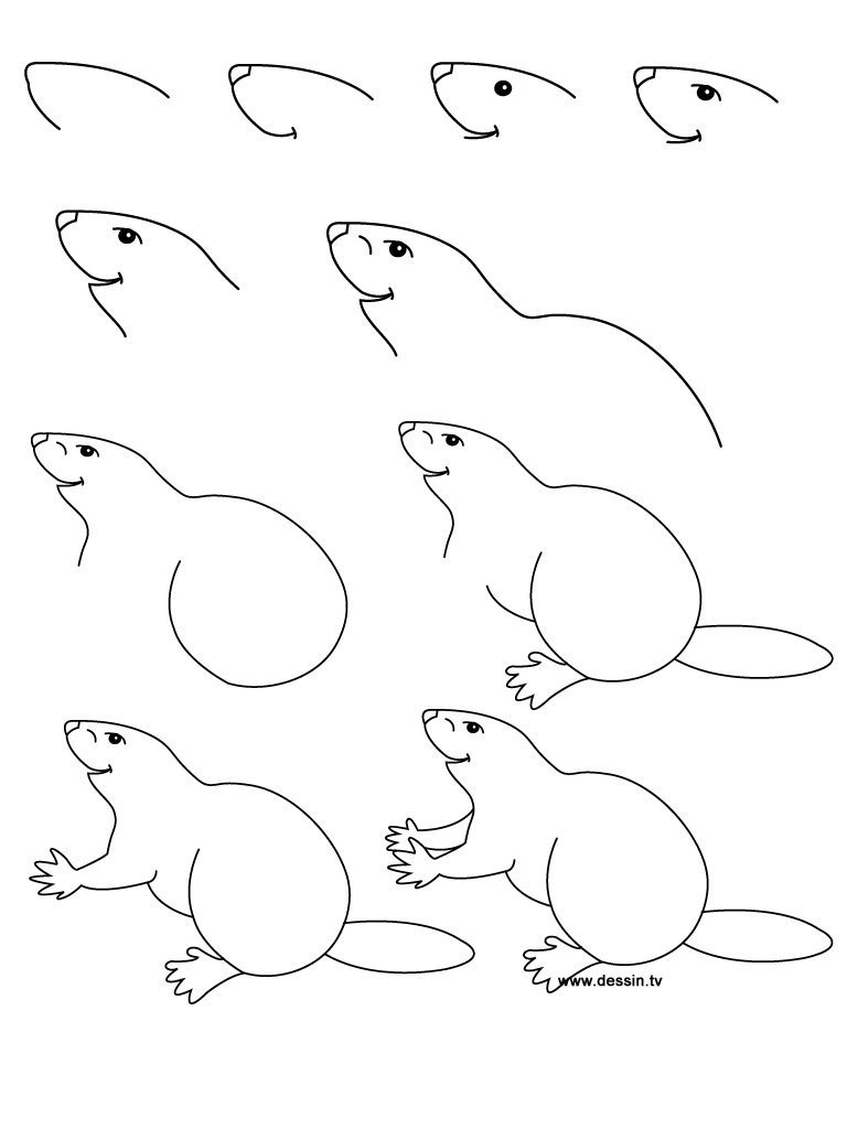 768x1024 How To Draw A Beaver Swimming Beaver Coloring Page Free Printable