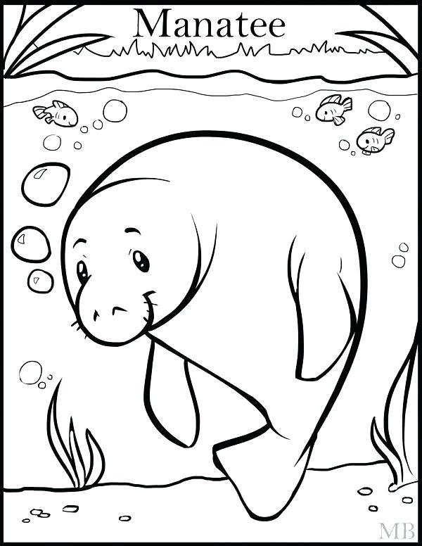 600x776 Manatee Coloring Pages Manatee Coloring Pagend Drawing