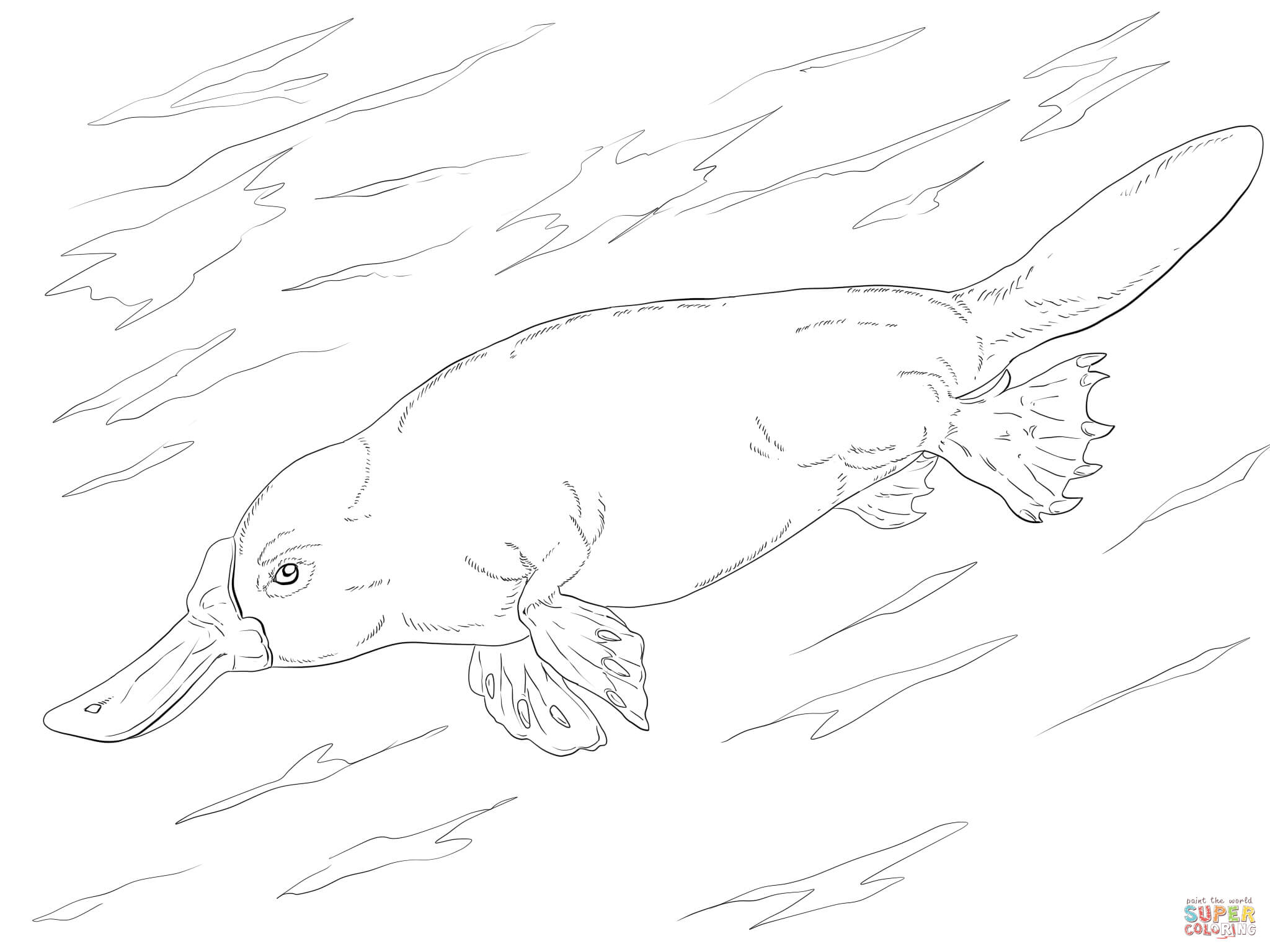 2048x1536 Swimming Coloring Page Image Clipart Images