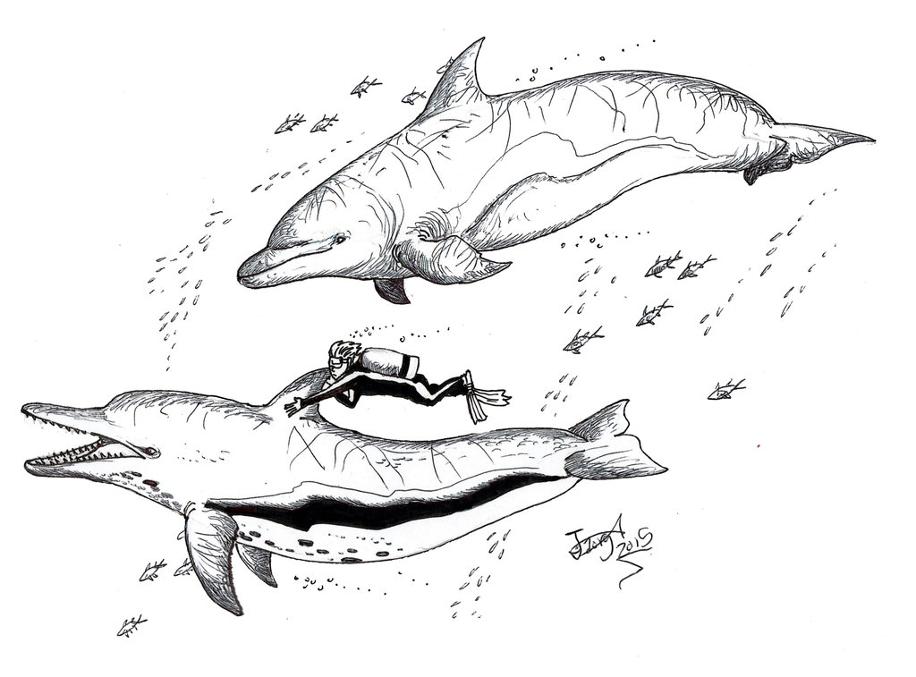 1024x757 Swimming With (Giant Killer) Dolphins By Hodarinundu