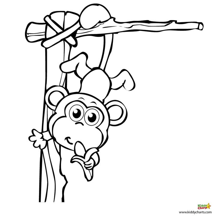 736x736 Monkey Coloring Pages A For Your Chart