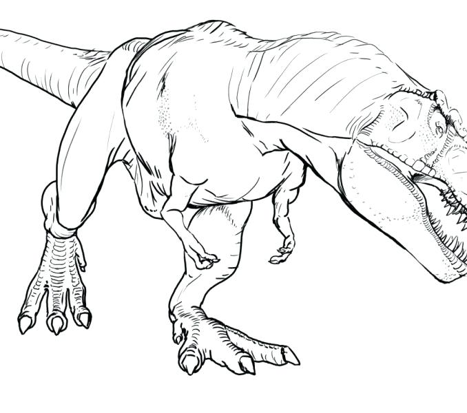 678x600 Spinosaurus Coloring How Draw For Step Dinosaurs T Rex