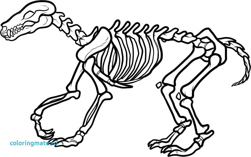 1024x642 T Rex Coloring Pages Unique T Rex Skeleton Coloring Page Az