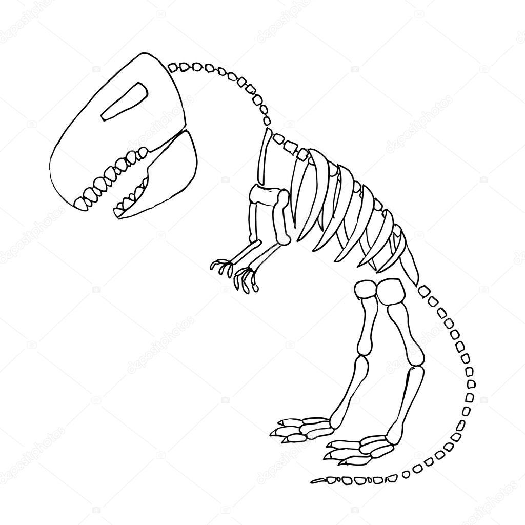 1024x1024 Tyrannosaurus Rex Fossil Stock Vector