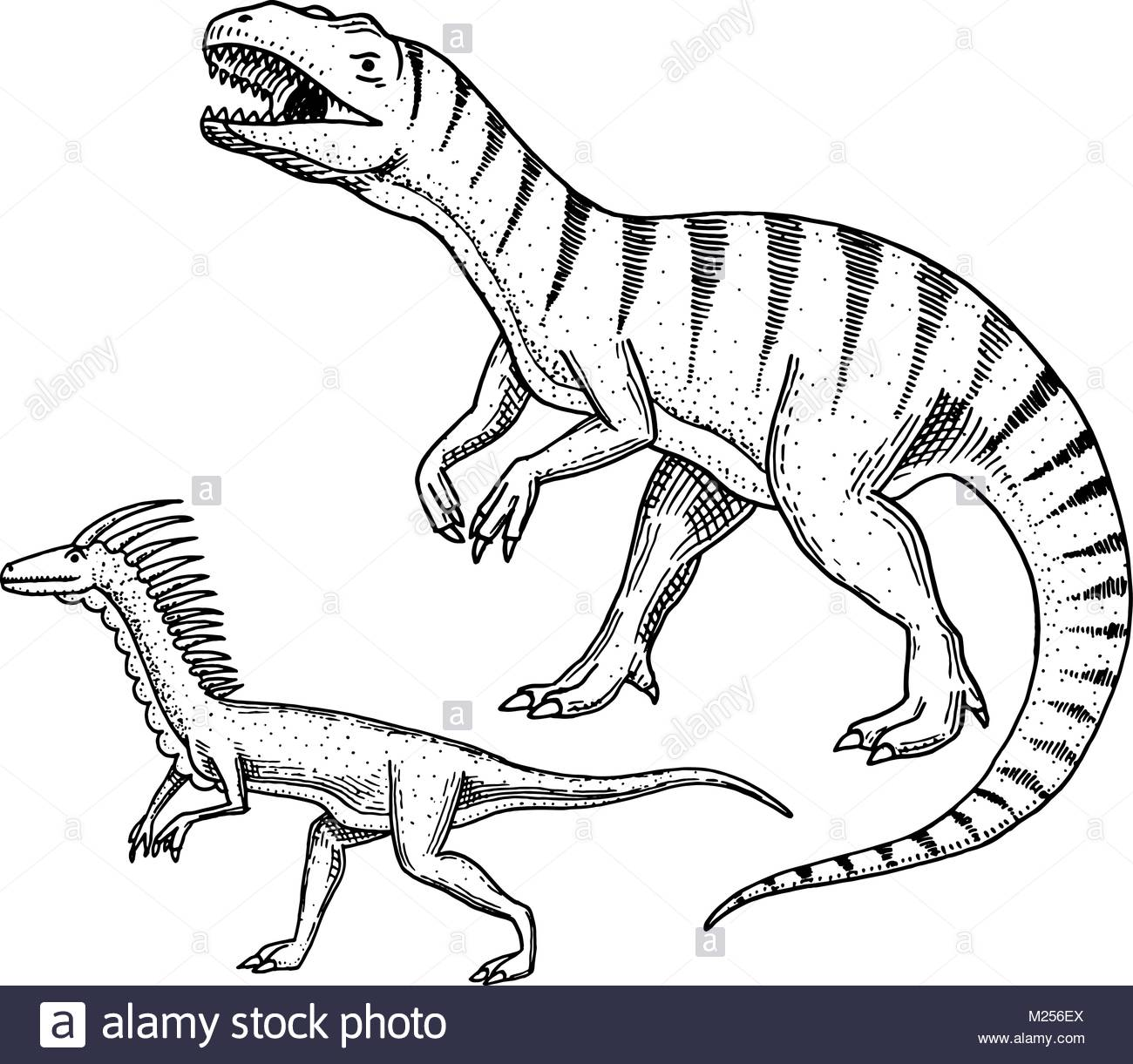 1300x1221 T Rex Black And White Stock Photos Amp Images