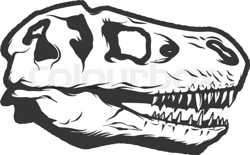 800x498 T Rex Dinosaur Skull Isolated On White Background. Images For Logo