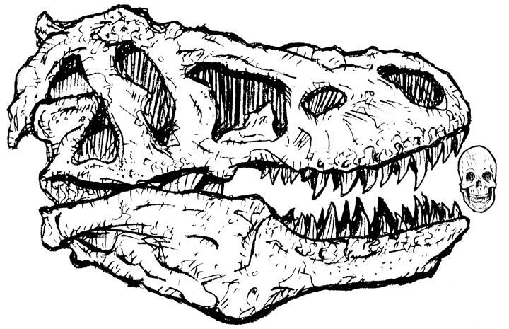 720x465 Trex Human Skull By Stvnhthr