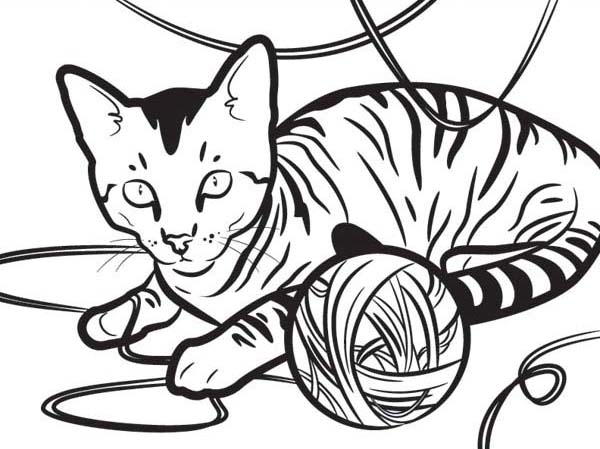 Tabby Cat Drawing at GetDrawings.com | Free for personal use Tabby ...