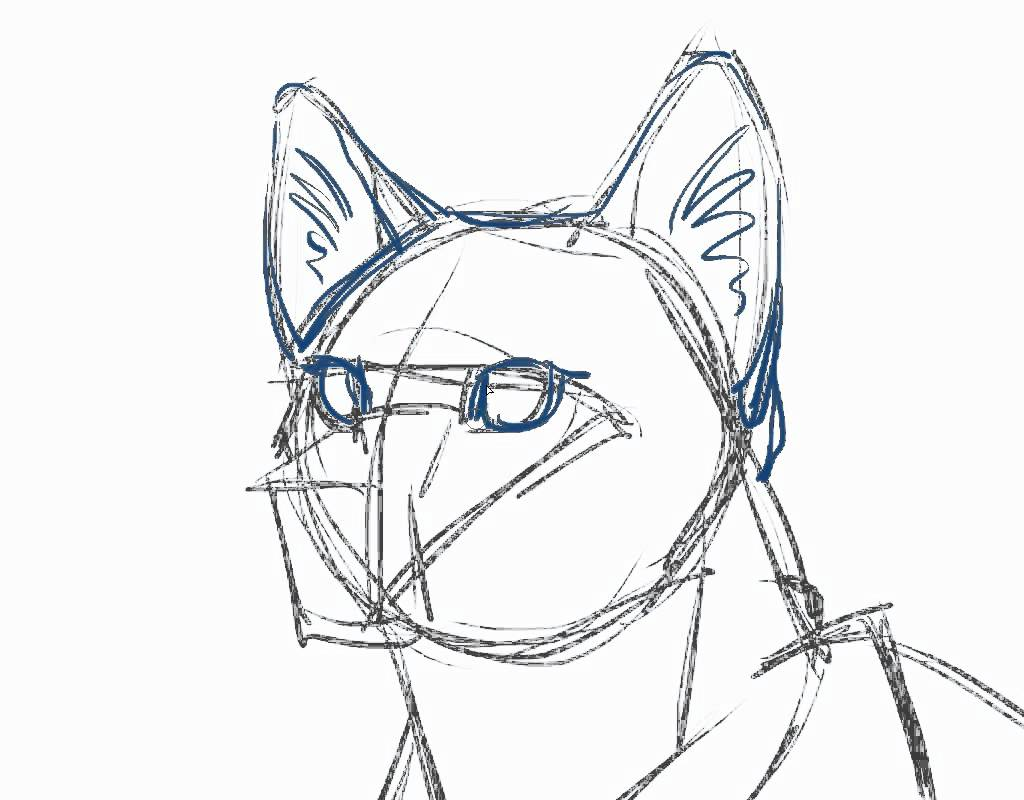 1024x800 How To Draw A Cat Tutorial