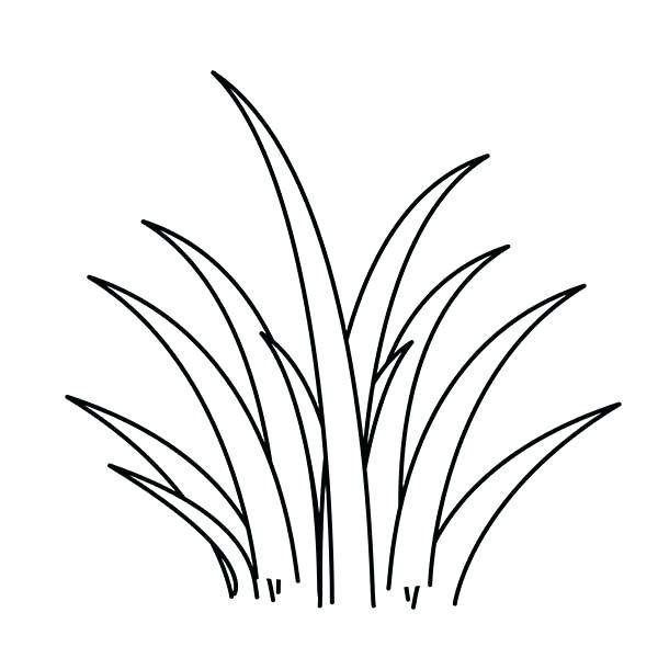 600x600 Grass Coloring Page Plants World Grass Coloring Pages Mardi Gras