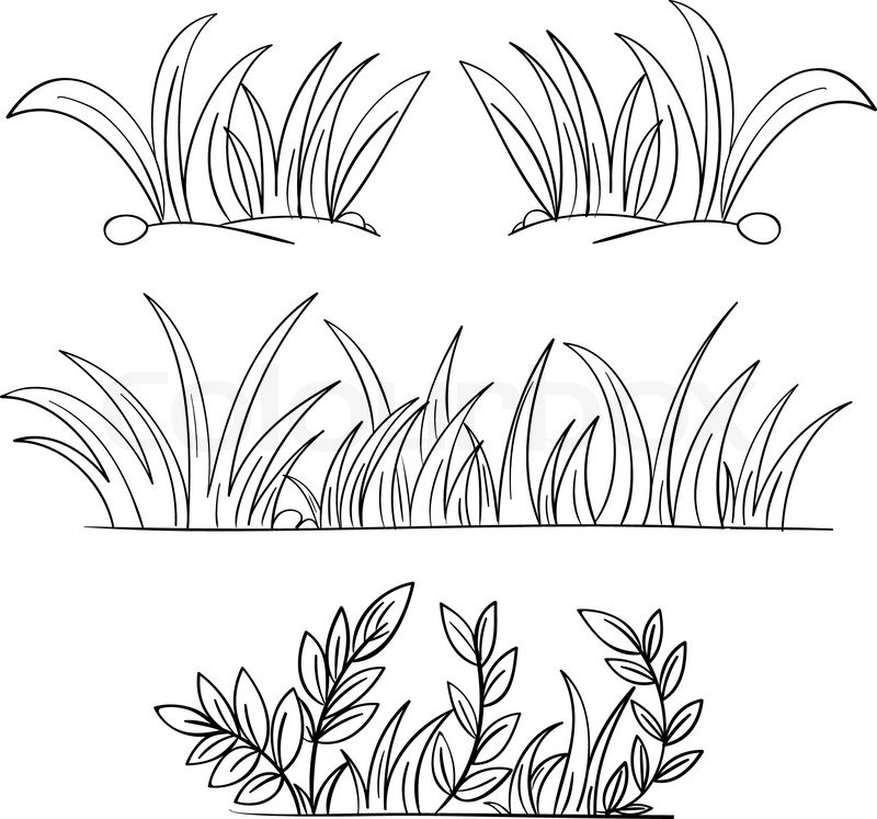 800x747 Grass Drawing Black And White Grass Vector Drawing Plants