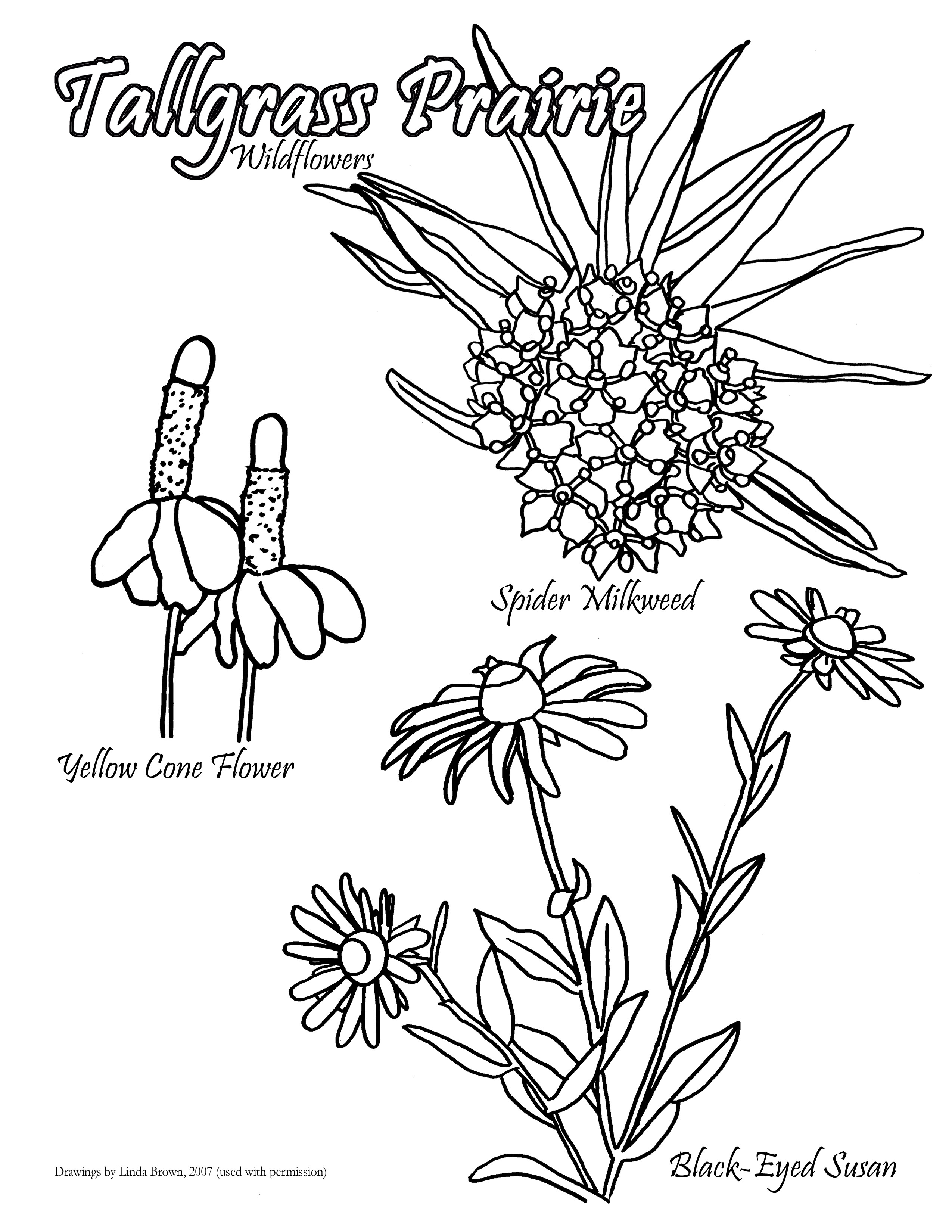 2550x3300 Great Tall Grass Coloring Page Photos
