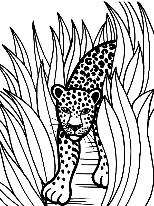 600x802 Rainforest Leopard Show Up From Tall Grass Coloring Pages Batch