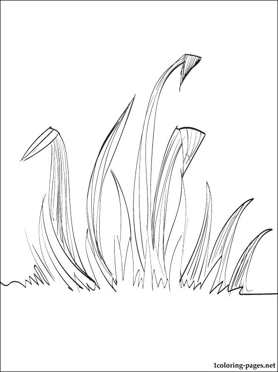 560x750 Grass Coloring Page Grass Coloring Page Mardi Gras Float Coloring