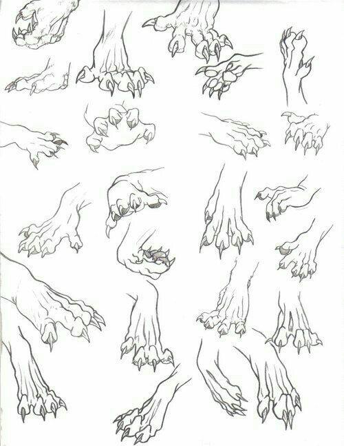 500x647 Animal Paws, Claws How To Draw Mangaanime How To Draw Manga