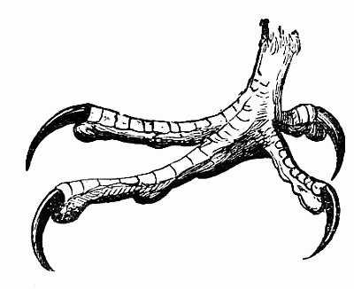 400x326 How To Draw Birds And Draw Bird Legs, Owls, Raptors, Eagles