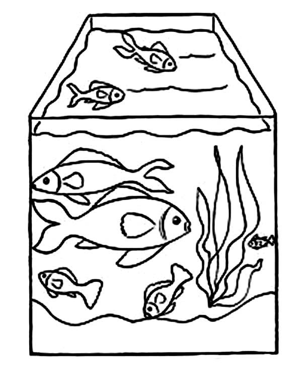 600x733 Drawing Fish Tank Coloring Page