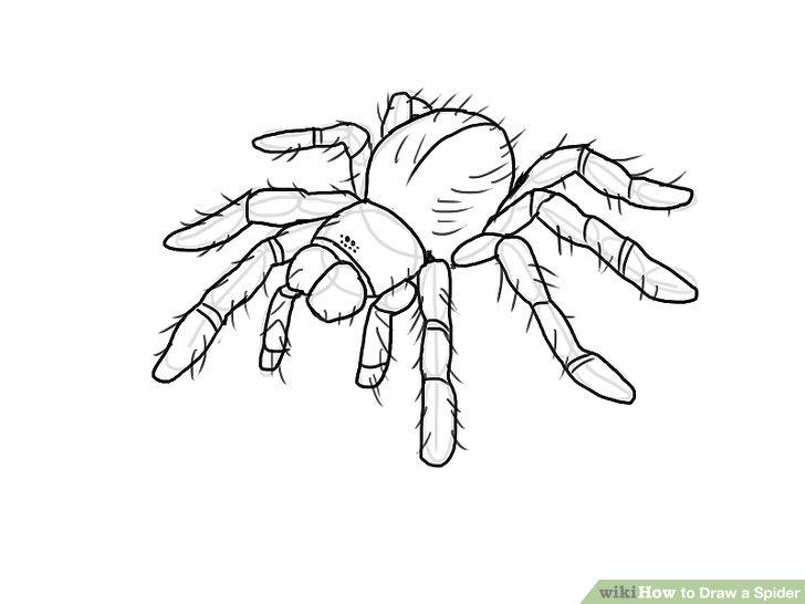 Tarantula Drawing