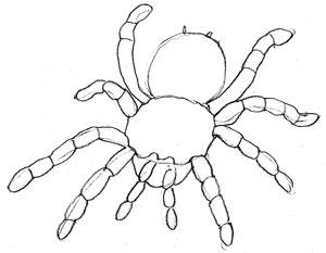 300x233 How To Draw A Spider