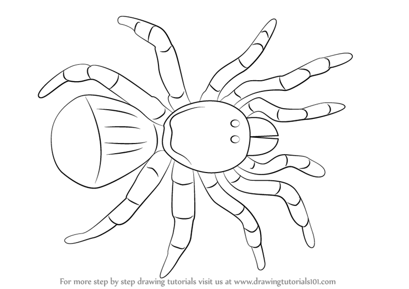 800x566 Learn How To Draw A Trapdoor Spider (Arachnids) Step By Step