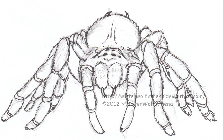 768x483 Mexican Redknee Tarantula Uncoloured By Wolfofthewintermoon