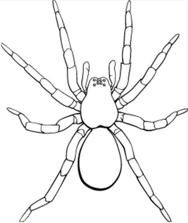 600x711 Picture Of Tarantula Coloring Page Picture Of Tarantula Coloring
