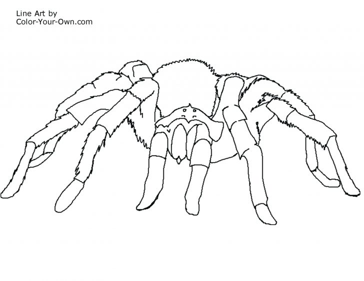728x563 Printable Spider Coloring Pages Tarantula Page A Closeup Drawn