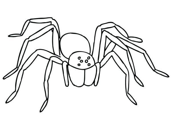600x463 Spider Coloring Page Creepy Tarantula Spider Coloring Page Spider