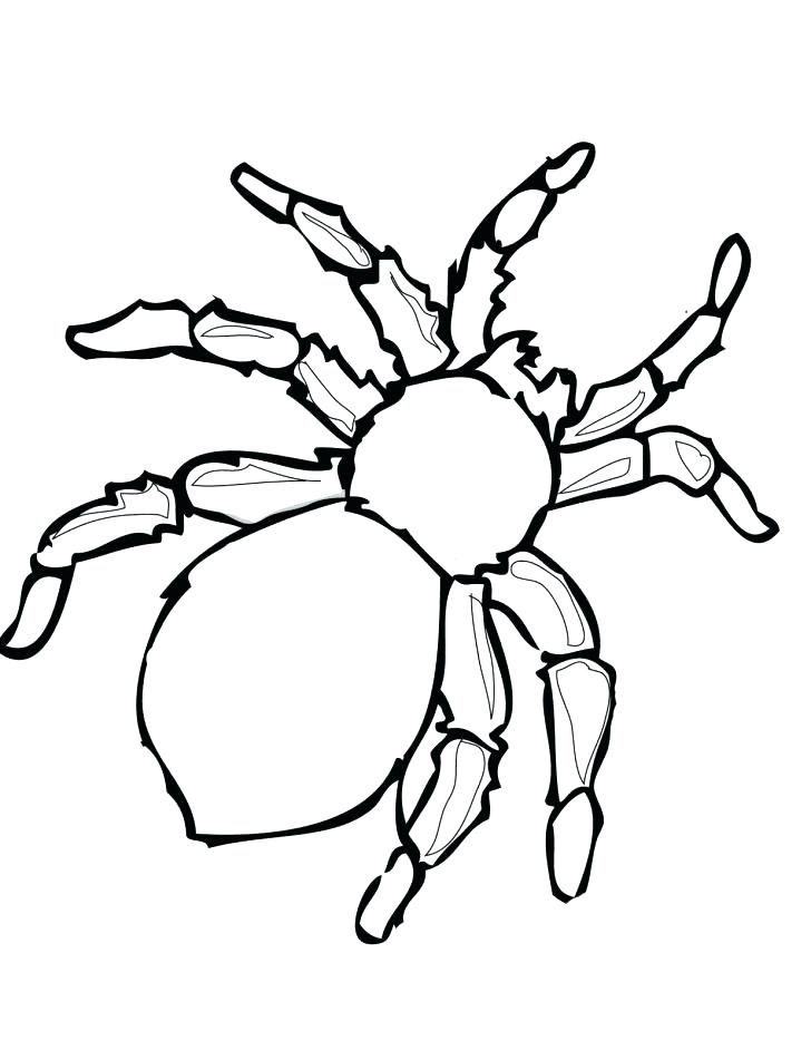 728x942 Spider Coloring Pages Print Color Craft Tarantula Free Murs