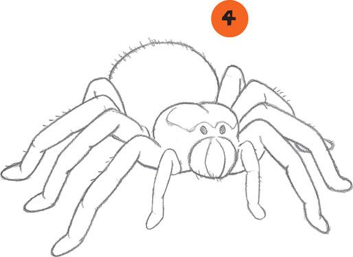 514x374 Tarantula