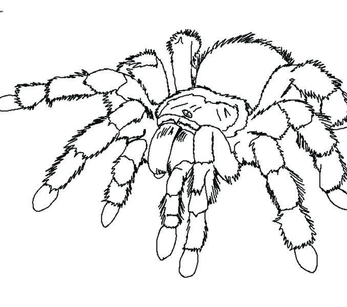 678x600 Tarantula Coloring Page Images Tarantula Coloring Page Tarantula