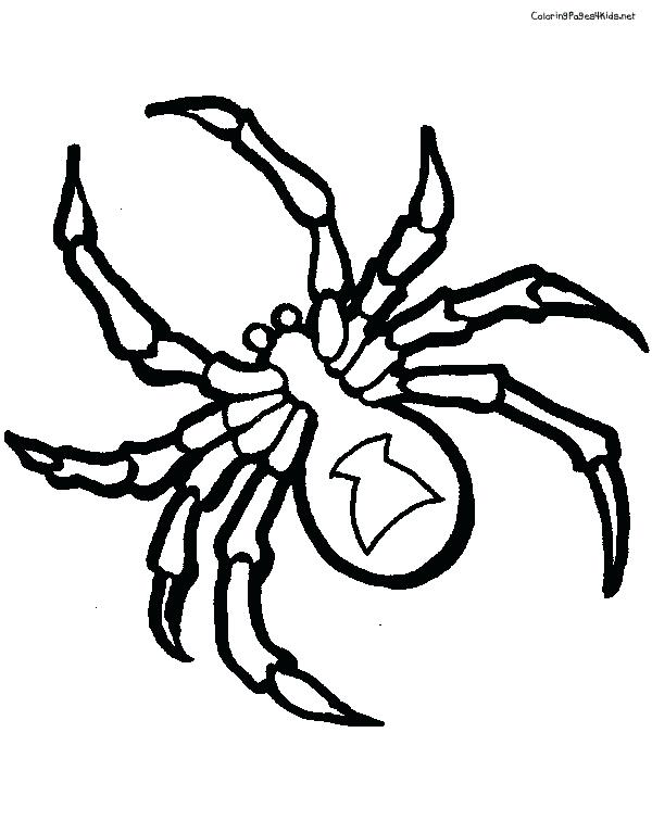 600x756 Tarantula Coloring Page Red Back Spider Drawing Spider Coloring