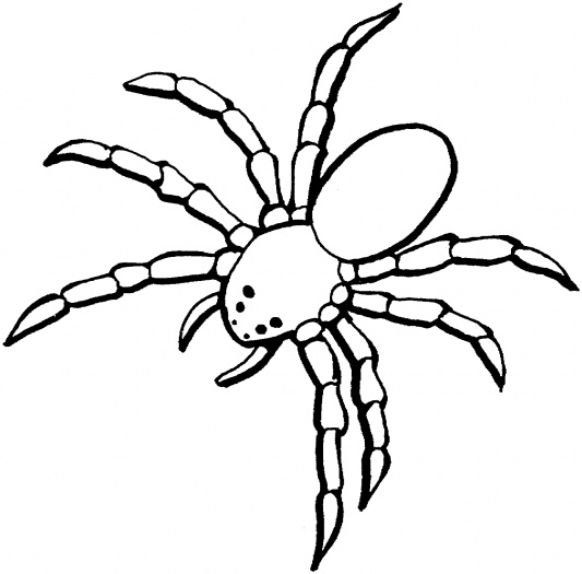 533x525 Simple Tarantula Drawing Giant Tarantula ( Spider ) Coloring