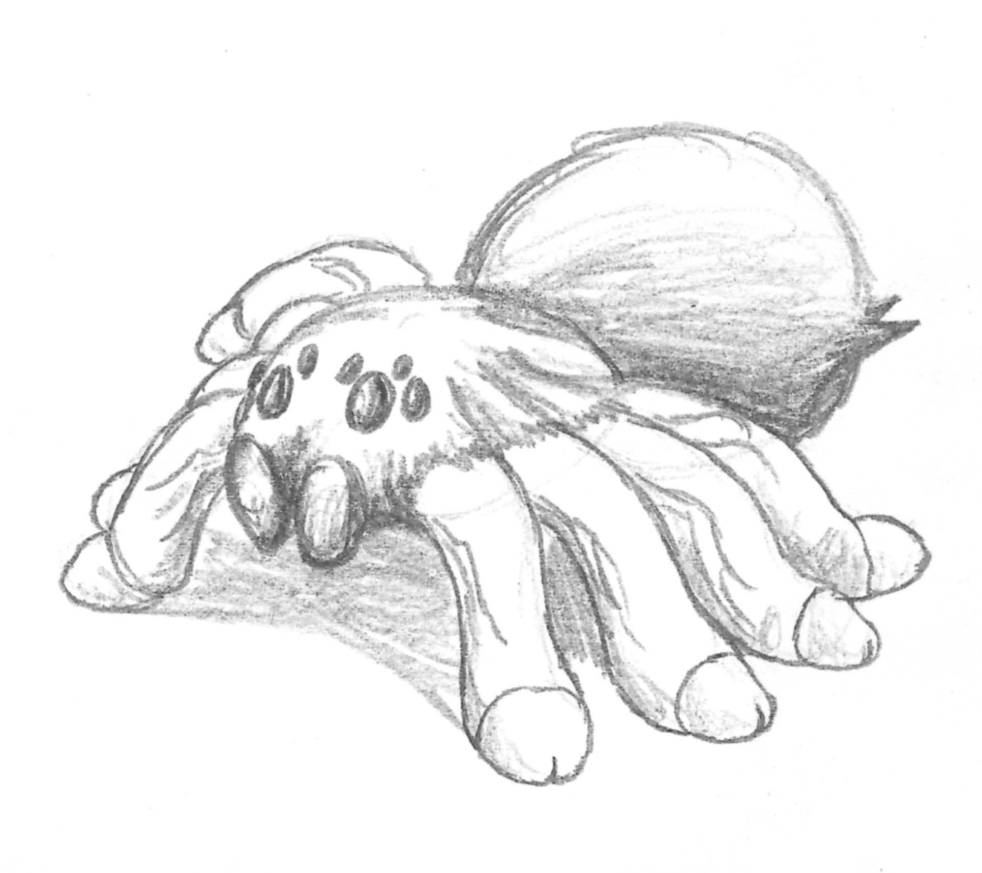 1931x1716 Cute Tarantula Drawing