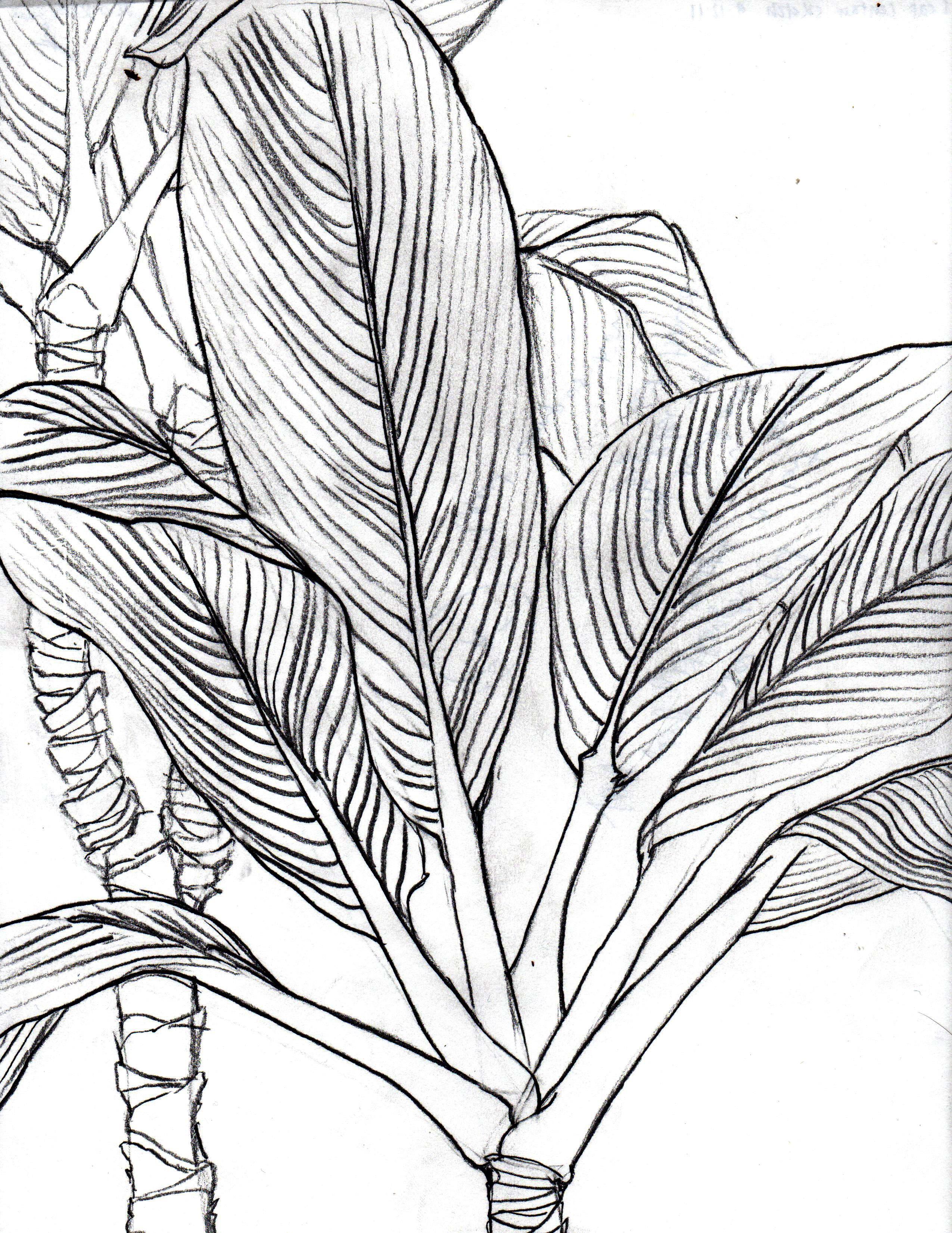 2550x3300 Ti Leaf (Contour Line Drawing) Jesse Talks