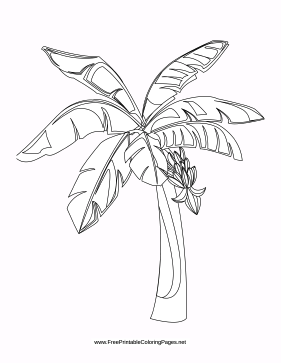 281x363 Tropical Coloring Page