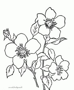 236x288 Beautiful Flowers Drawing Vector Illustration Isolated Desen