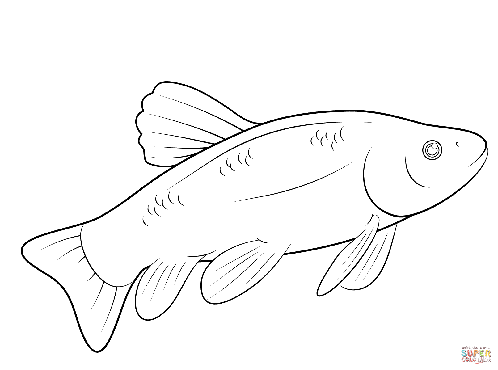 1612x1198 Fish Coloring Page Free Printable Pages