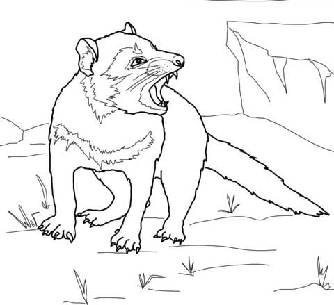 480x439 Tasmanian Devil Growling Coloring Page Free Printable Coloring Pages