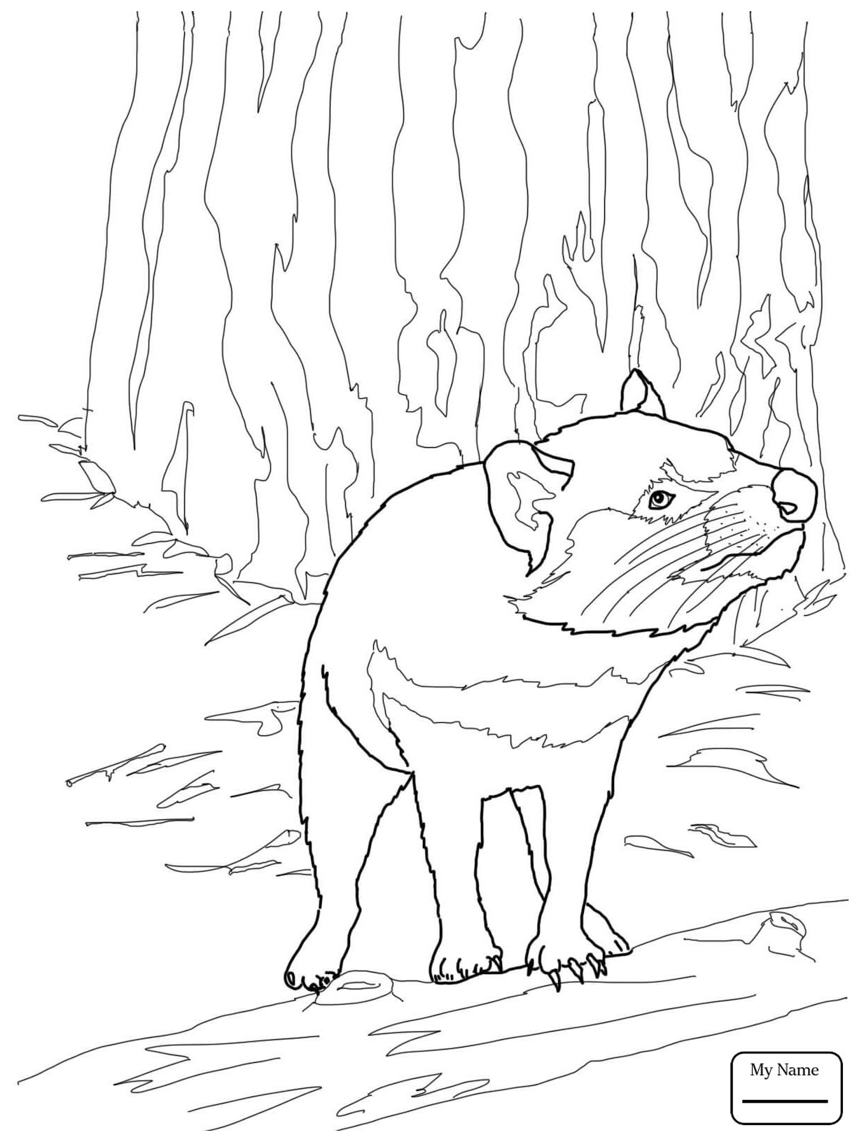 1224x1632 Coloring Pages Australian Tasmanian Devil Mammals Tasmanian Devil