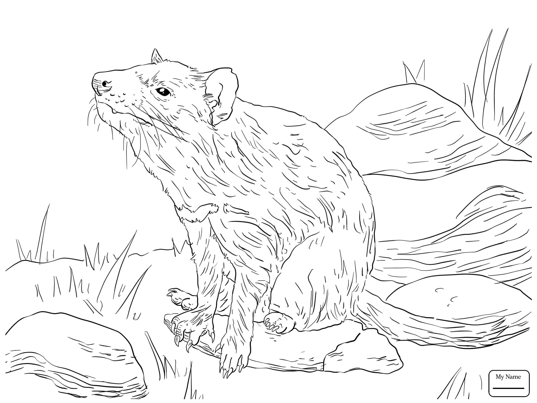 2089x1567 Coloring Pages Mammals Tasmanian Devil Tasmanian Devil Sign