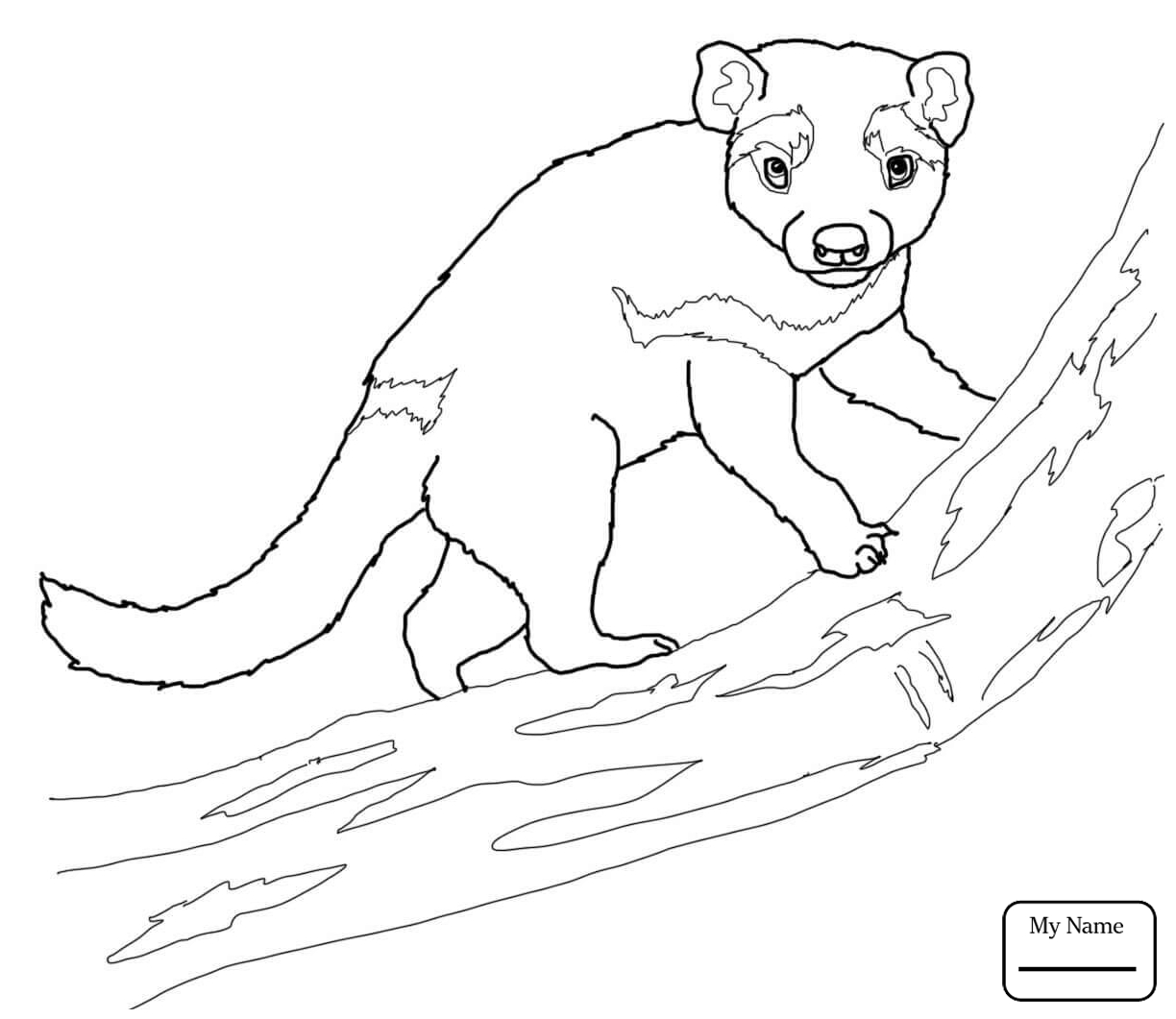 Tasmanian Devil Drawing at GetDrawingscom Free for personal use