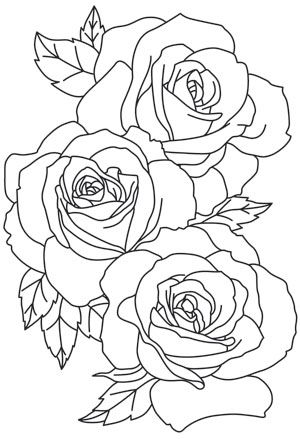 300x439 The Linework Of These Large Blooms Give A Lavish Feel To This